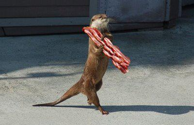 Squirrel-with-Bacon1.jpg