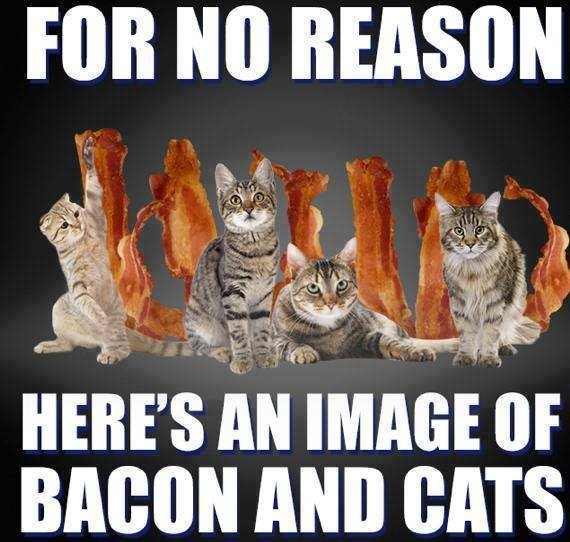 bacon and Cats